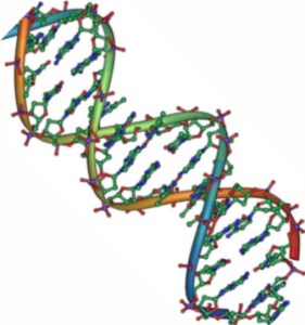 712dc-dna_double_helix_45