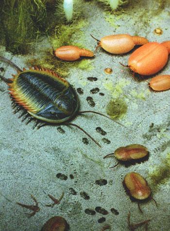 L3_Cambrian_Life_More