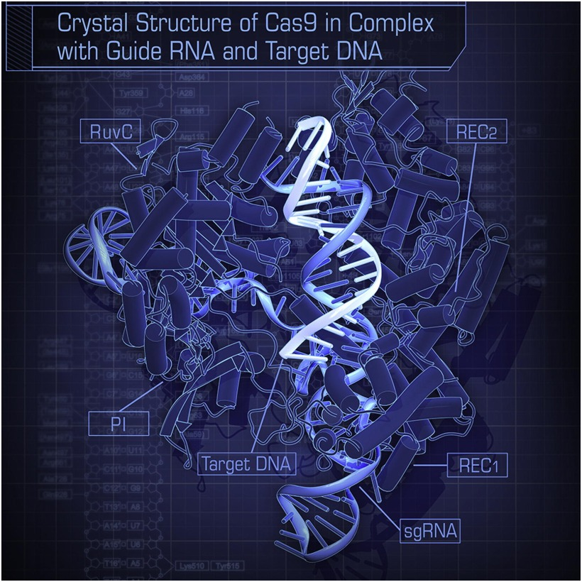 Cas9 cystal stucture