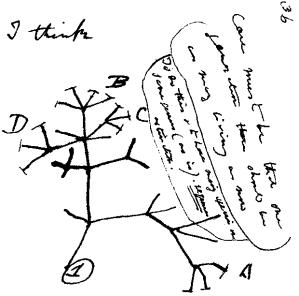 Darwin_tree_cut